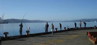 fishing in Wellington