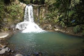 Coromandel day trips - Waiau Kauri Grove and Waterfall